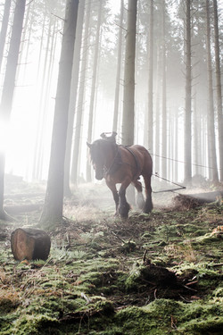 Waldarbeiter-2