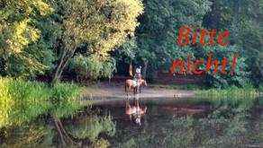 Baden mit Pferden am/im Fischteich...
