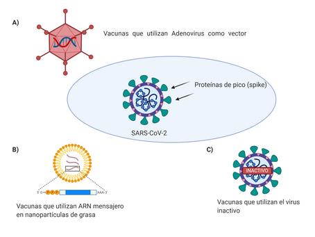 ESPECIAL: Carrera de vacunas