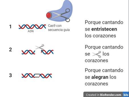 ¿Pequeñas tijeras que cortan el ADN?
