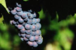 Vineyard Photography