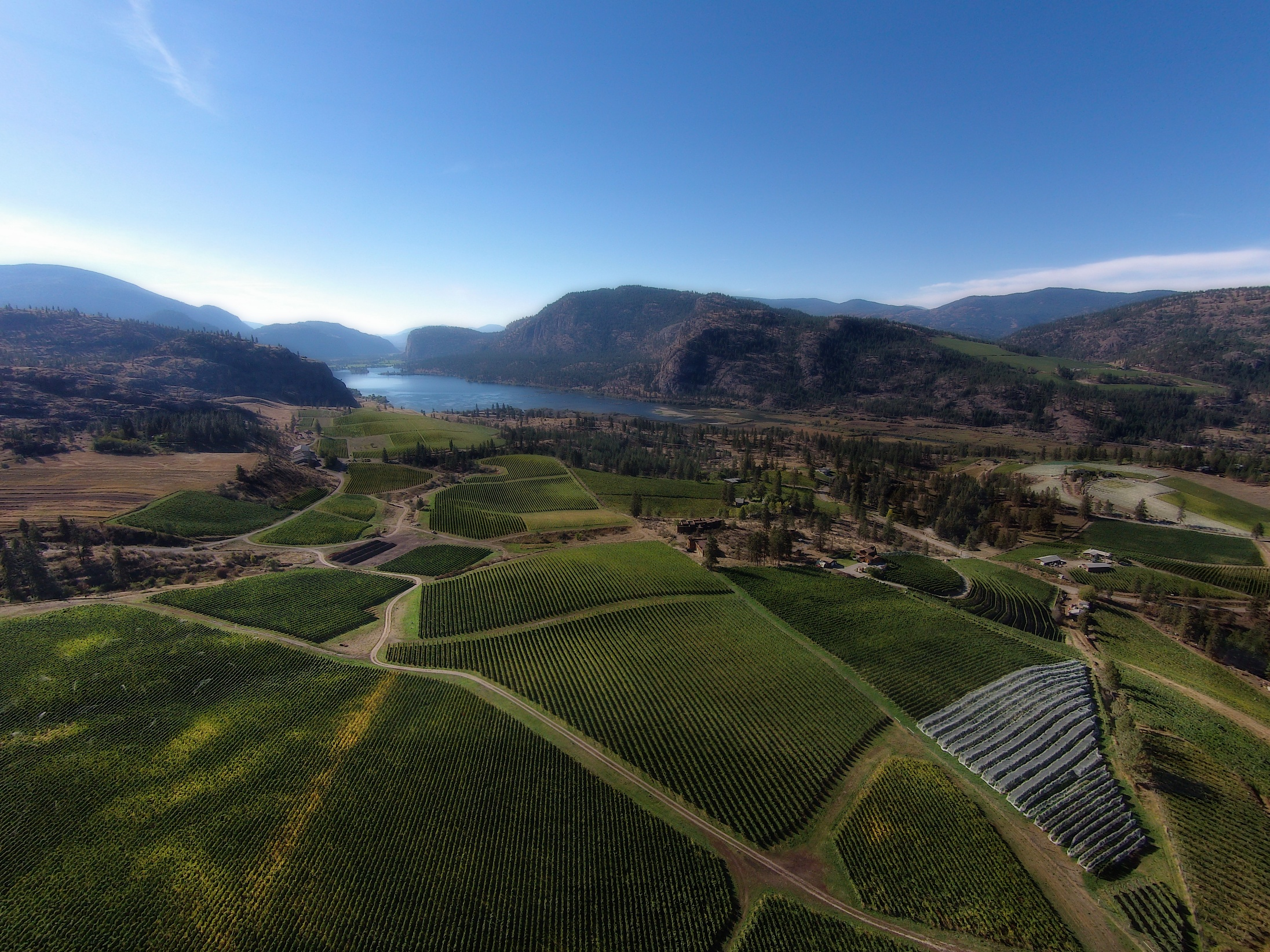 View over Blue Mountain Vineyard