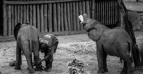 Elephant Orphanage Project