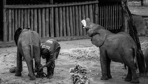 Elephant Orphanage Project