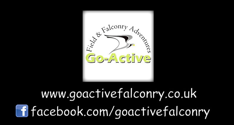 Welcome to Go-Active Falconry