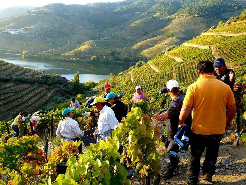 På vinfältet