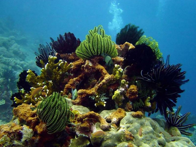 дайвинг на южные острова Фукуок