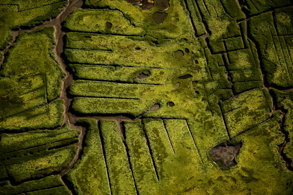 Aerial photo of salt marsh, Plum Island, MA By Jeremiah Johnson