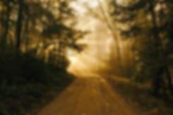 Chuckanut Mountain treed path_edited.jpg