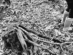 in the wood NetB.jpg