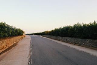Road and Orange Trees