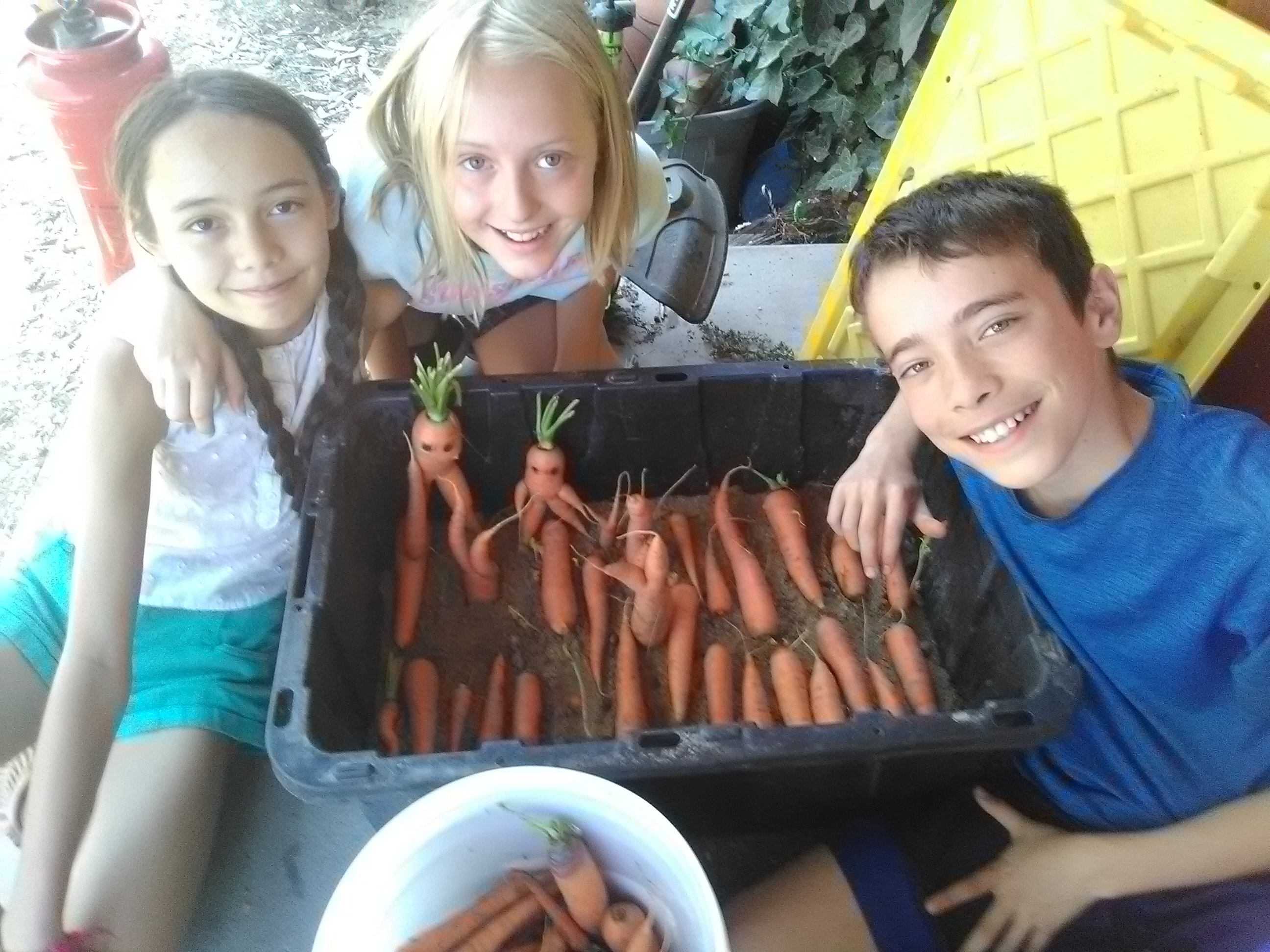 Mugworts.Kids and carrots