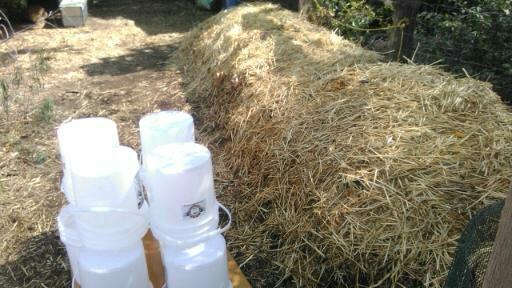 Biodynamic Compost Pile