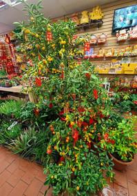 Soy Bean Chan Flower Shop 2.jpg
