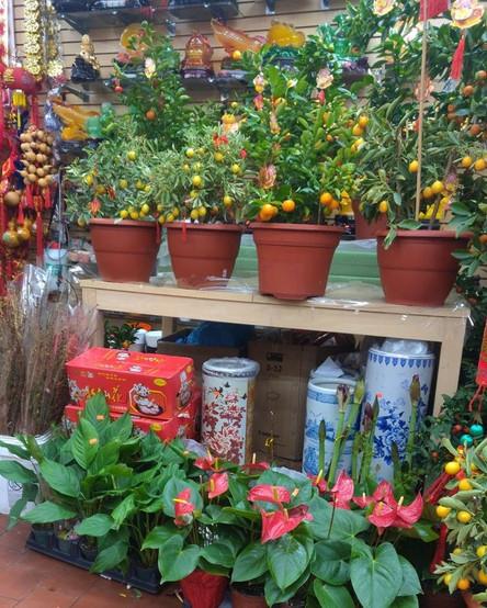 Soy Bean Chan Flower Shop 3.jpg