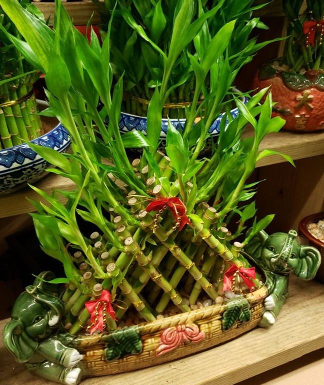 Soy Bean Chan Flower Shop 4.jpg