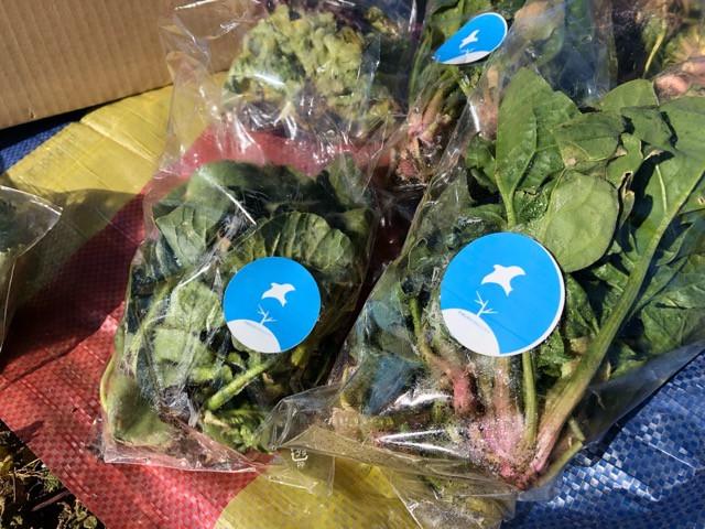 「食」を農業から学んでみようプロジェクト 野菜販売会をやりました!