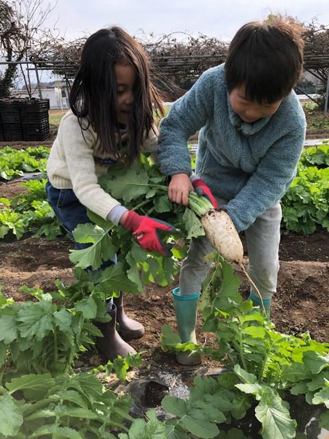 「食」を農業から学んでみようプロジェクト 活動報告