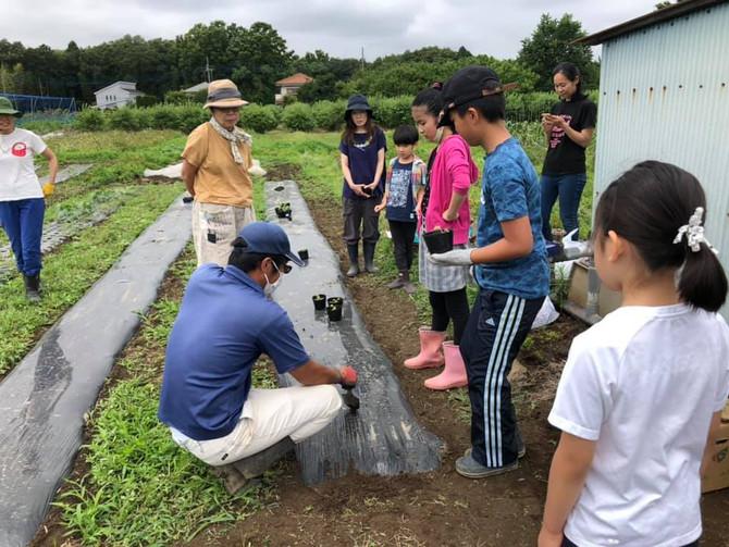 苗の定植やりました🌱 コドモ農業大学
