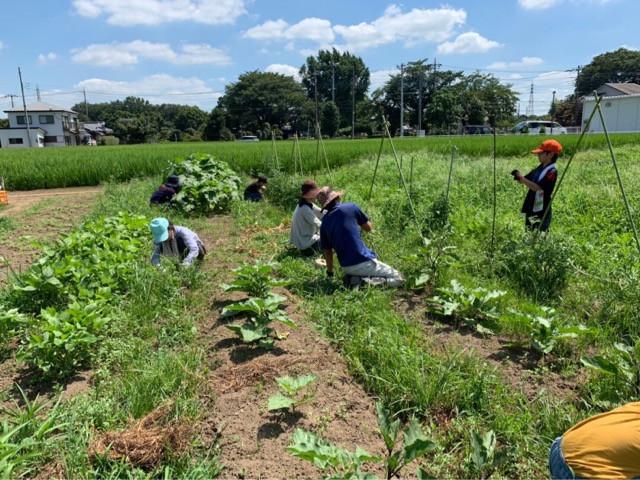 農業プロジェクト活動報告