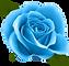 Blue_Rose_PNG_Clip_Art_Image-1621452305(1).png