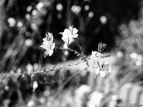 Normandie, Aout 2016-2.jpg