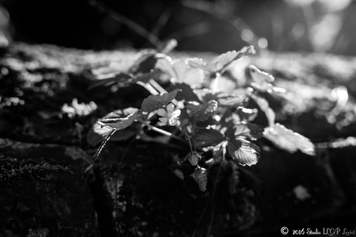 Normandie, Aout 2016-18.jpg