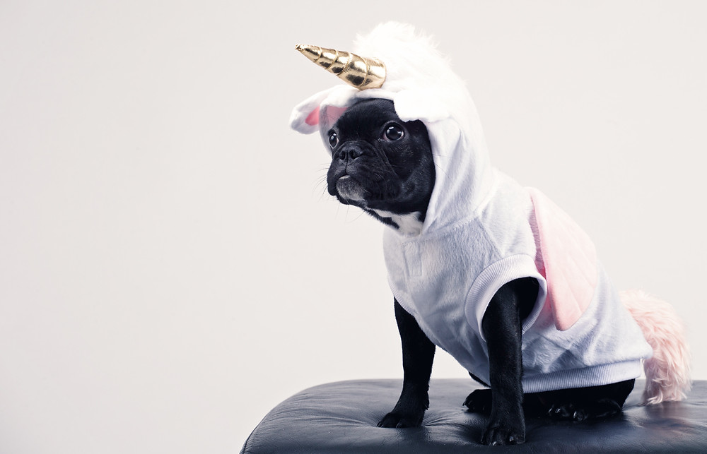 dog dressed as a pink and gold unicorn