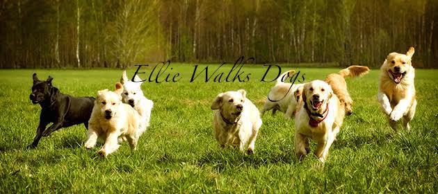 large-dogs.jpg