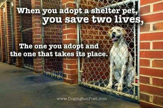 October is National Adopt a Shelter Dog Month!
