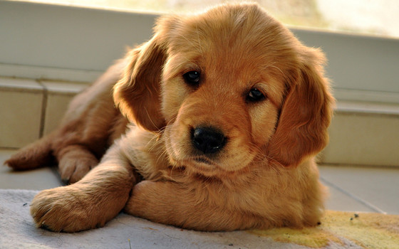 Your First Pet: How to Find the Right One for You