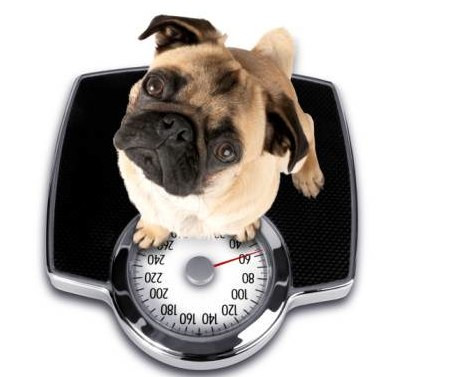 Is your dog packing on the pounds?