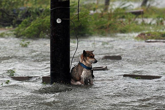 How to help pets in Houston, TX.