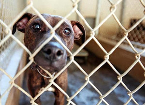 October is for adopt a shelter dog
