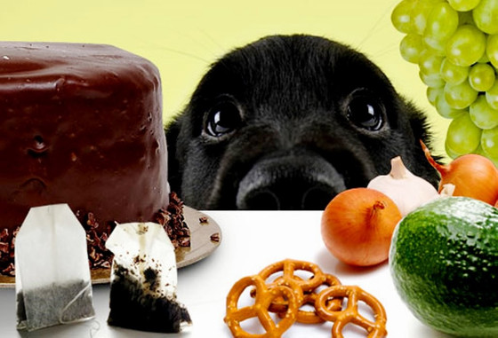 Human foods that are poisonous to dogs