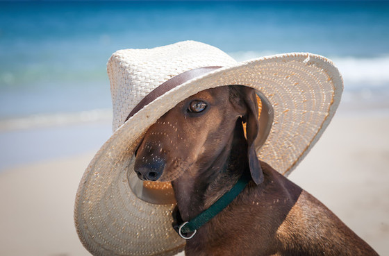 How to keep your dog cool and comfortable during the summer