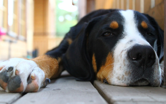 Are dogs affected by daylight saving time change?