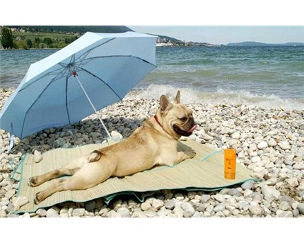 Should you apply sunscreen on your dog?