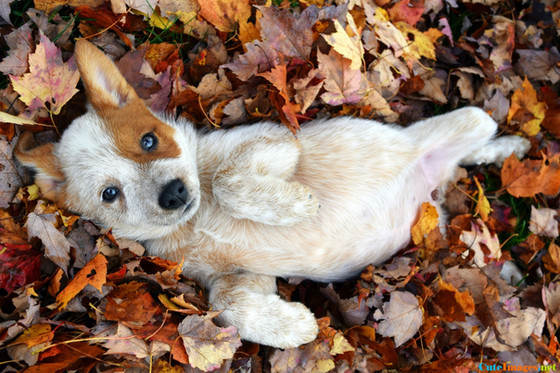 Paws into Fall