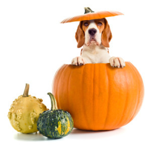 Halloween safety tips for your dog