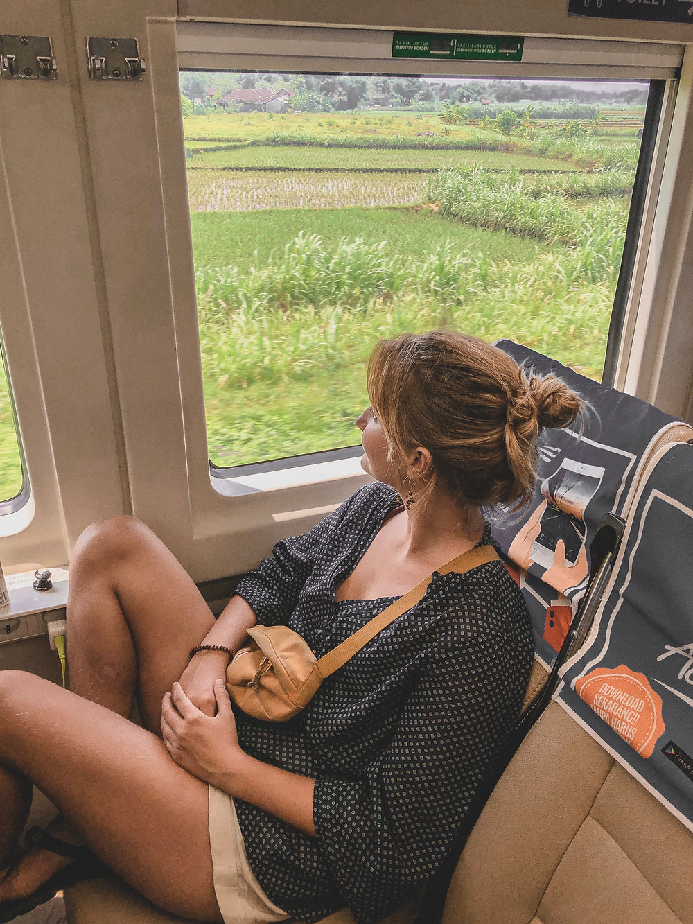 Woman in train looking out the window on ricefields