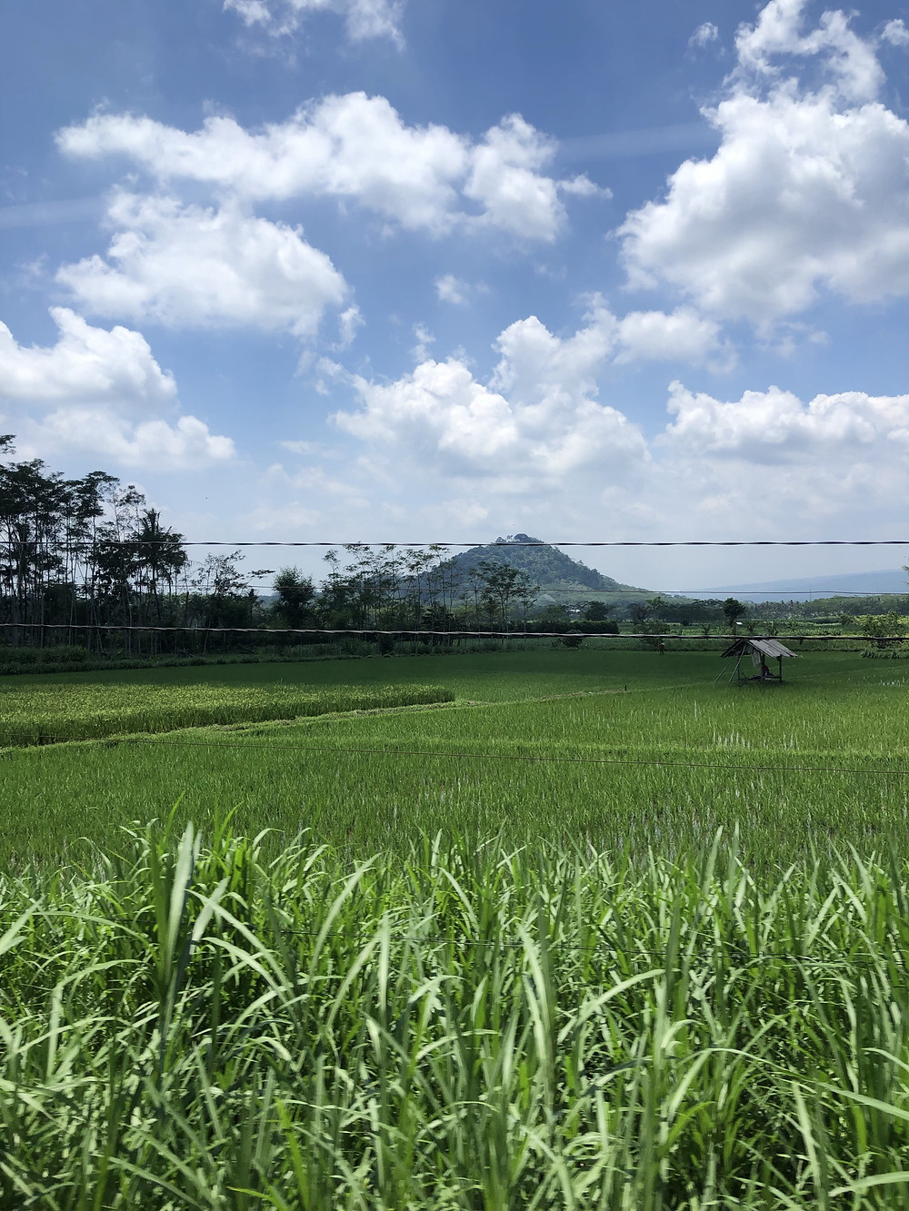 View from train window of rice fields on Java, Indonesia
