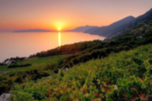 Peljesac Dingac Vineyards