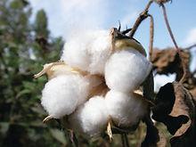 cotton colors1.jpg