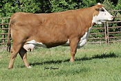 9075W's Dam - HH Miss Advance 1028L