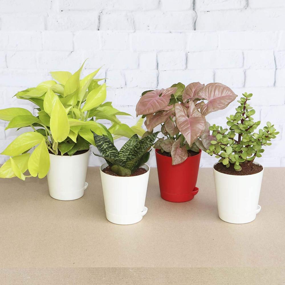 Indoor Self-Watering Plants