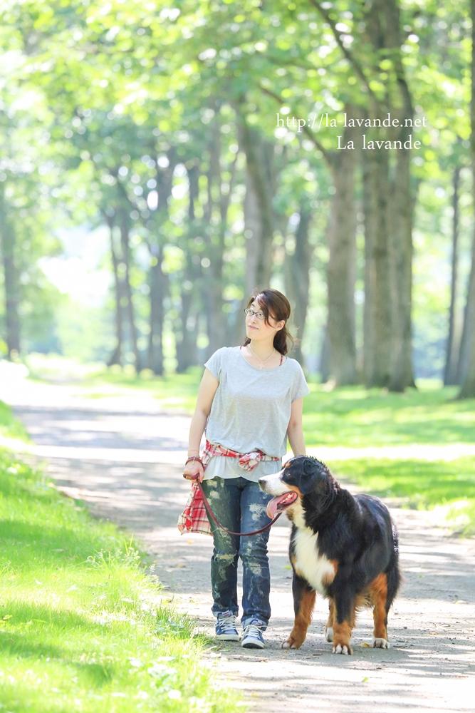 Bernese Mountain Dog-Crea