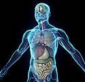 human-body-3d-3d-human-body-in-loop-rota