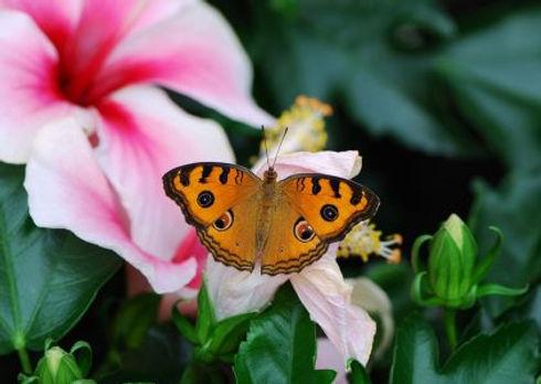 vlinderparadijs.jpg