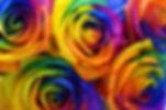 gay roses.jpg